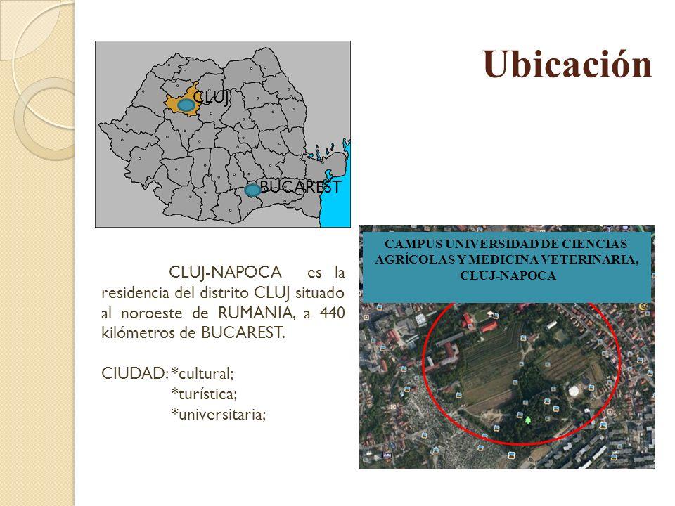 Ubicación CLUJ-NAPOCA es la residencia del distrito CLUJ situado al noroeste de RUMANIA, a 440 kilómetros de BUCAREST. CIUDAD: *cultural; *turística;