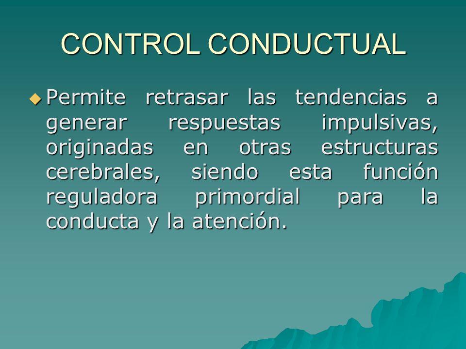 CONTROL CONDUCTUAL Permite retrasar las tendencias a generar respuestas impulsivas, originadas en otras estructuras cerebrales, siendo esta función re