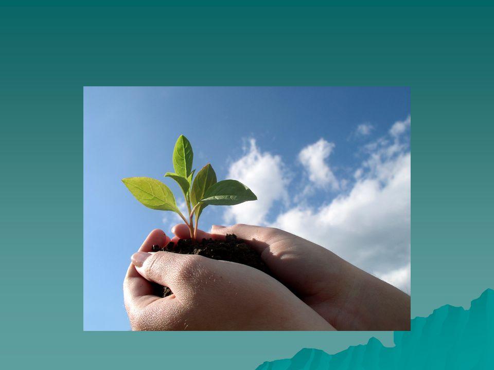FUNCIONES EJECUTIVAS Las funciones más complejas del humano, participan en el control, la regulación y la planeación eficiente de la conducta humana, también permiten que los sujetos se involucren exitosamente en conductas independientes, productivas y útiles para sí mismos Las funciones más complejas del humano, participan en el control, la regulación y la planeación eficiente de la conducta humana, también permiten que los sujetos se involucren exitosamente en conductas independientes, productivas y útiles para sí mismos