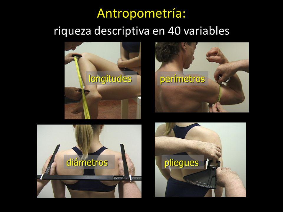longitudes pliegues diámetros perímetros Antropometría: riqueza descriptiva en 40 variables