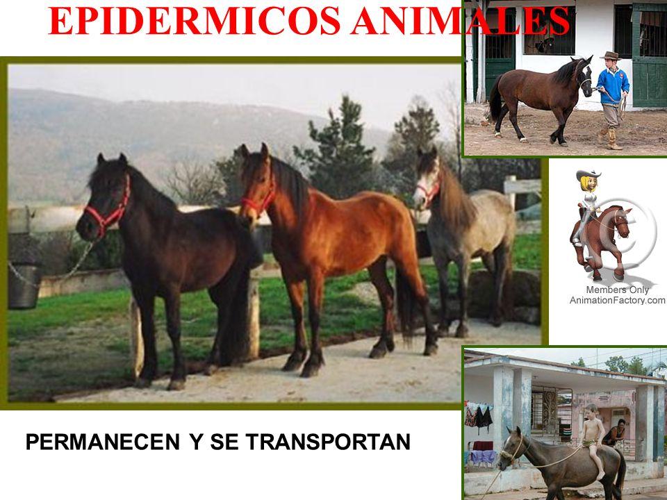 PERMANECEN Y SE TRANSPORTAN EPIDERMICOS ANIMALES