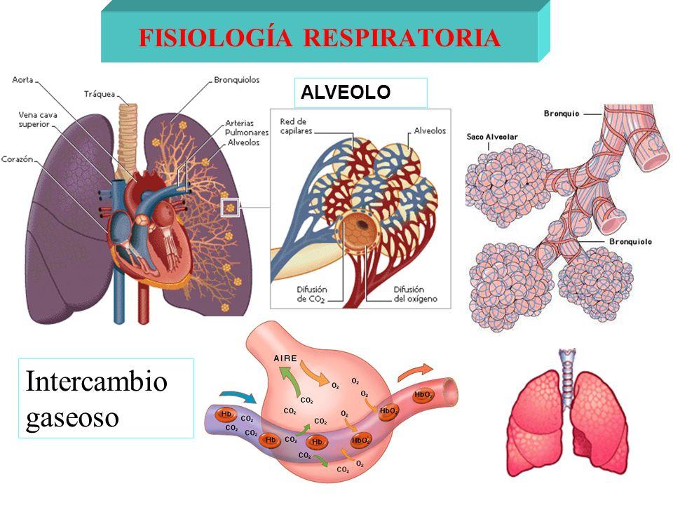 Intercambio gaseoso FISIOLOGÍA RESPIRATORIA ALVEOLO