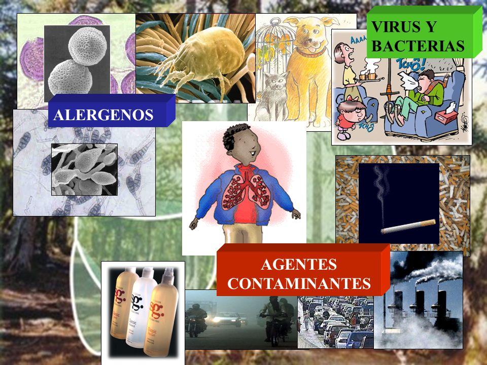 AGENTES CONTAMINANTES ALERGENOS VIRUS Y BACTERIAS