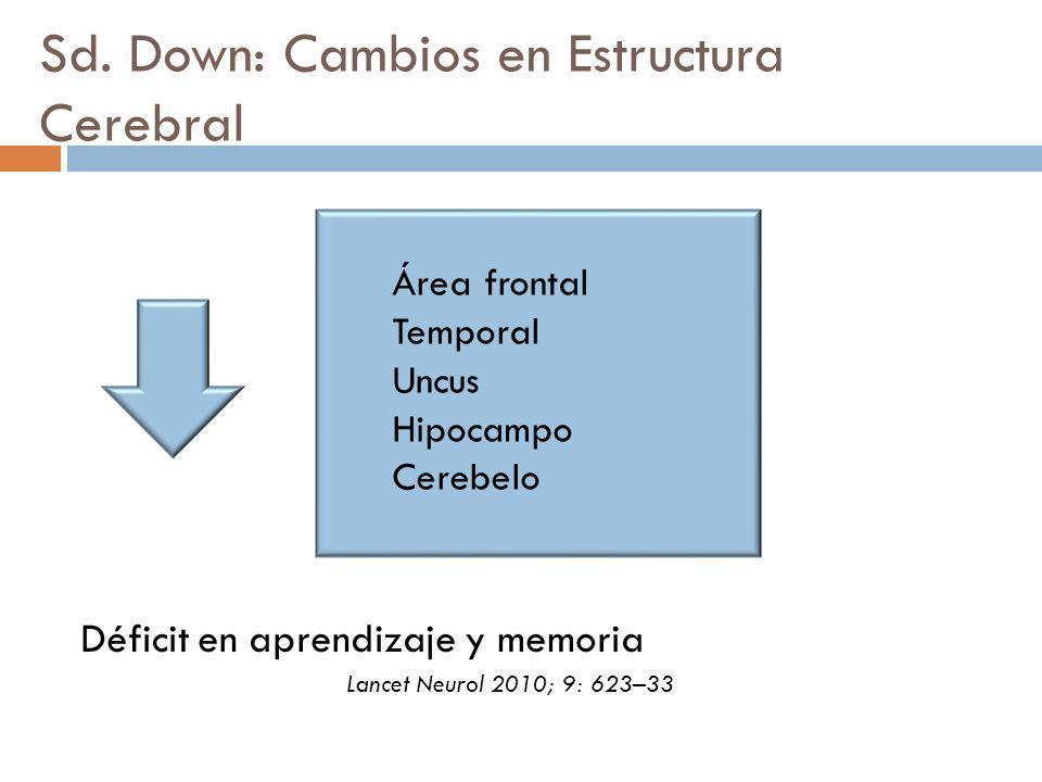 Sd. Down: Cambios en Estructura Cerebral Déficit en aprendizaje y memoria Área frontal Temporal Uncus Hipocampo Cerebelo Lancet Neurol 2010; 9: 623–33