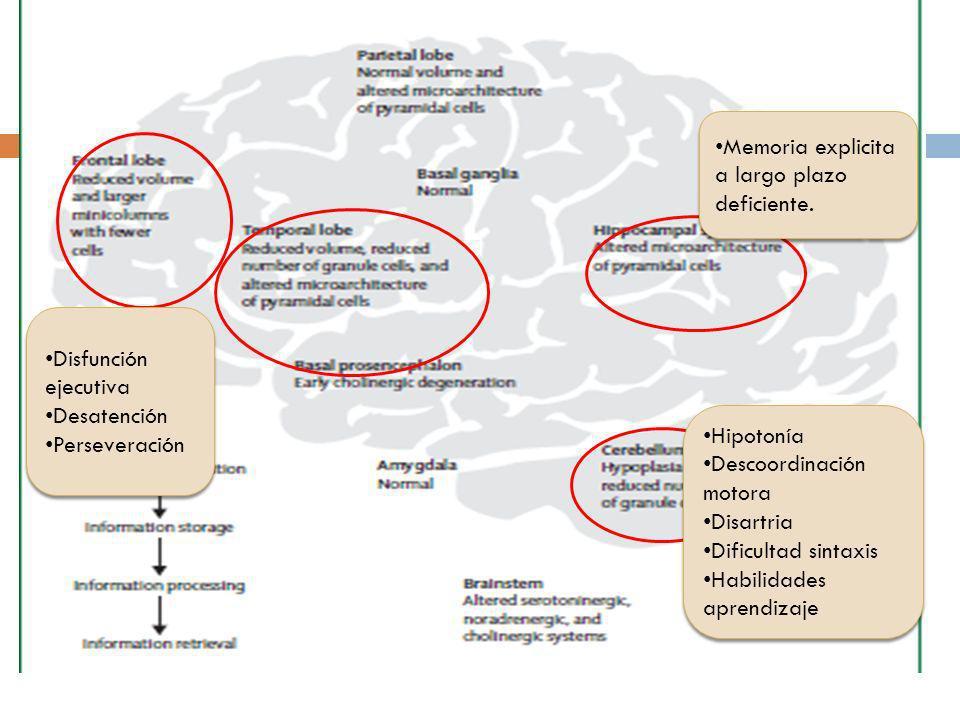Disfunción ejecutiva Desatención Perseveración Disfunción ejecutiva Desatención Perseveración Memoria explicita a largo plazo deficiente. Hipotonía De