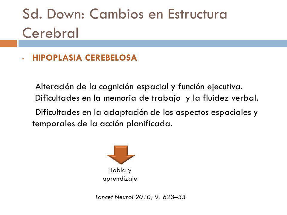 Sd. Down: Cambios en Estructura Cerebral HIPOPLASIA CEREBELOSA Alteración de la cognición espacial y función ejecutiva. Dificultades en la memoria de