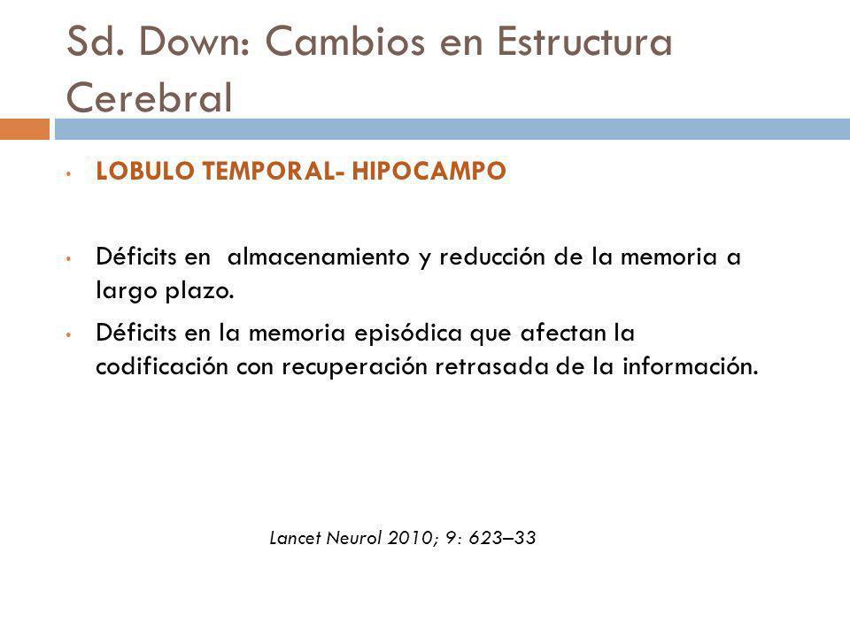 Sd. Down: Cambios en Estructura Cerebral LOBULO TEMPORAL- HIPOCAMPO Déficits en almacenamiento y reducción de la memoria a largo plazo. Déficits en la