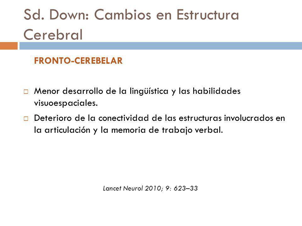 Sd. Down: Cambios en Estructura Cerebral FRONTO-CEREBELAR Menor desarrollo de la lingüística y las habilidades visuoespaciales. Deterioro de la conect