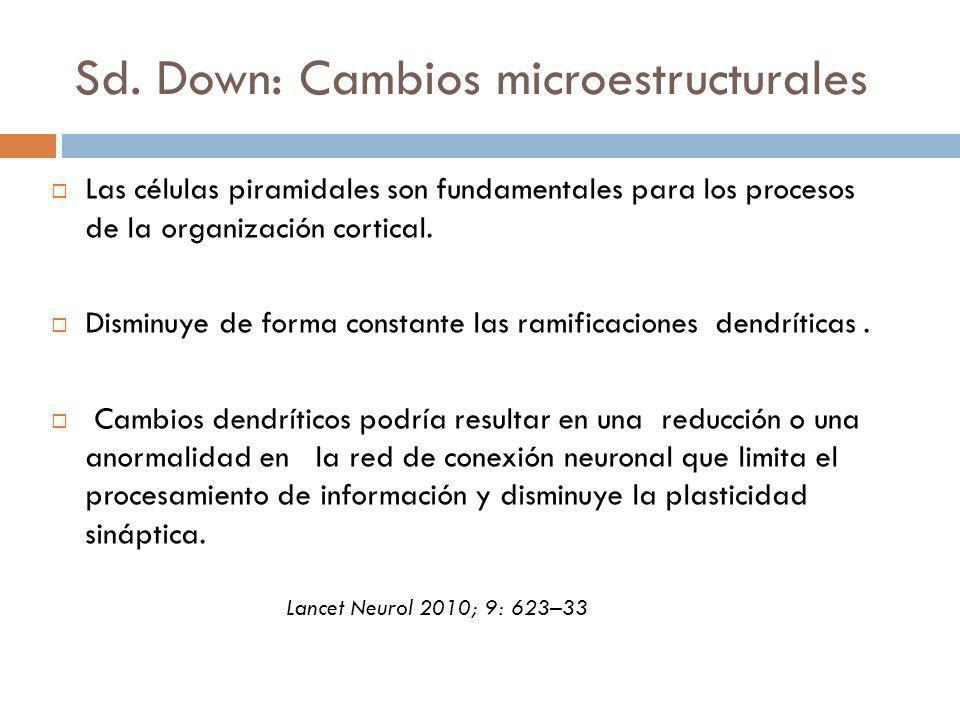 Sd. Down: Cambios microestructurales Las células piramidales son fundamentales para los procesos de la organización cortical. Disminuye de forma const