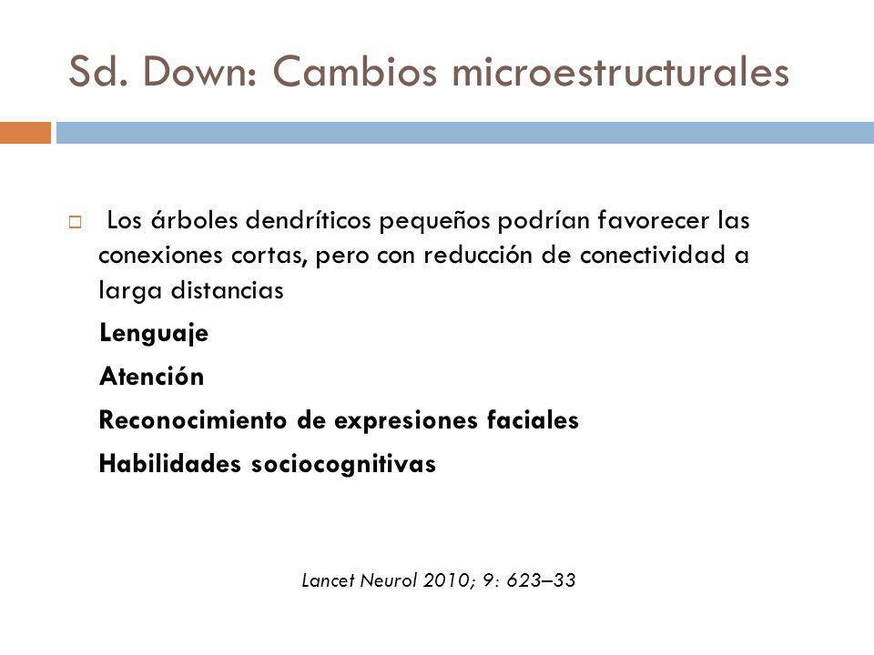 Sd. Down: Cambios microestructurales Los árboles dendríticos pequeños podrían favorecer las conexiones cortas, pero con reducción de conectividad a la