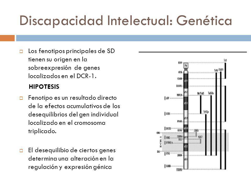 Discapacidad Intelectual: Genética Los fenotipos principales de SD tienen su origen en la sobreexpresión de genes localizados en el DCR-1. HIPOTESIS F
