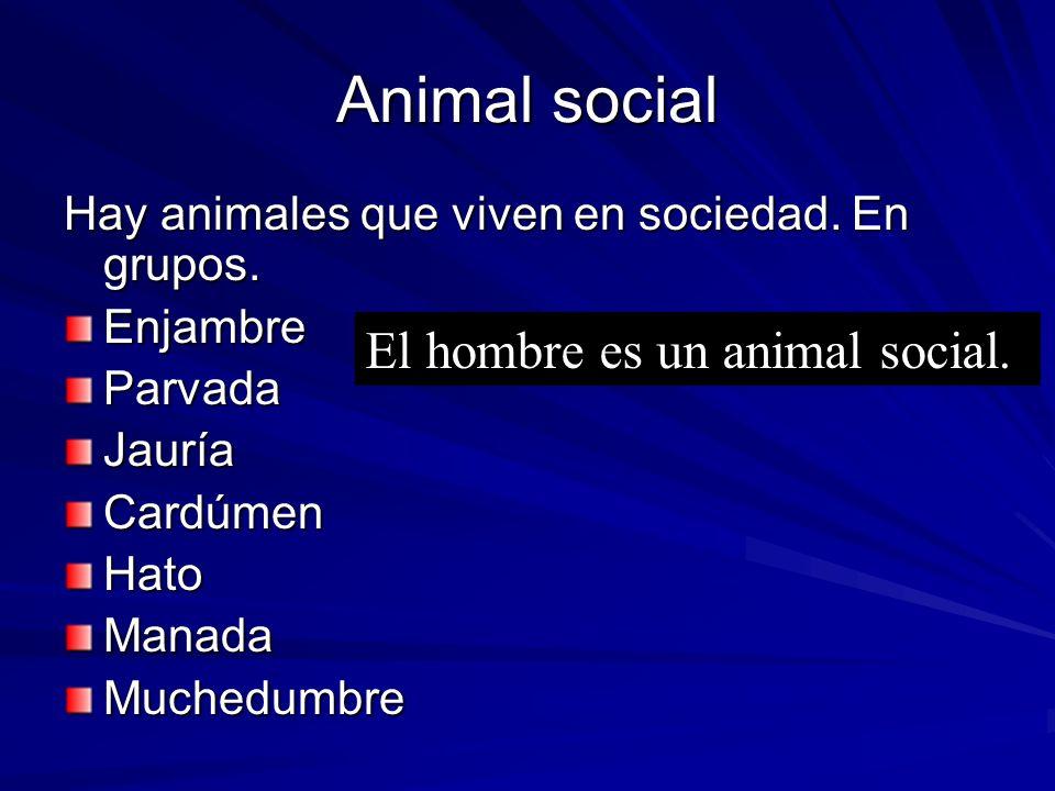 Animal social Hay animales que viven en sociedad. En grupos. EnjambreParvadaJauríaCardúmenHatoManadaMuchedumbre El hombre es un animal social.