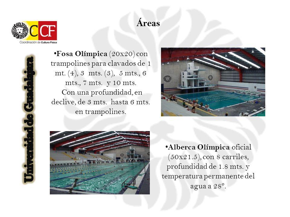 Alberca Olímpica oficial (50x21.5), con 8 carriles, profundidad de 1.8 mts. y temperatura permanente del agua a 28º. Fosa Olímpica (20x20) con trampol