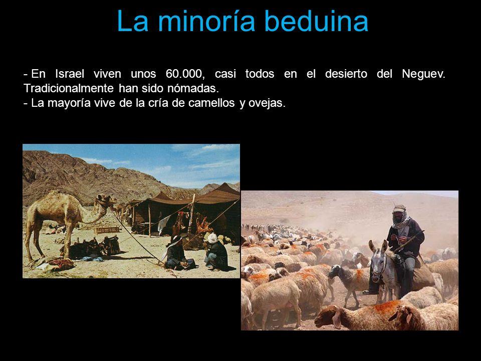 La minoría beduina - En Israel viven unos 60.000, casi todos en el desierto del Neguev. Tradicionalmente han sido nómadas. - La mayoría vive de la crí