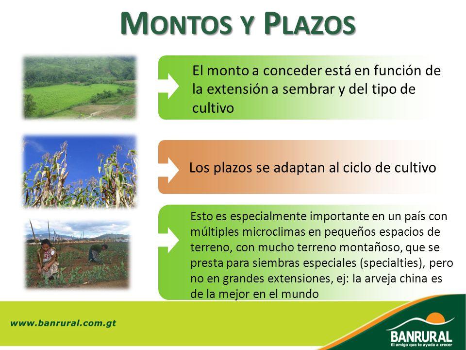 M ONTOS Y P LAZOS El monto a conceder está en función de la extensión a sembrar y del tipo de cultivo Los plazos se adaptan al ciclo de cultivo Esto e