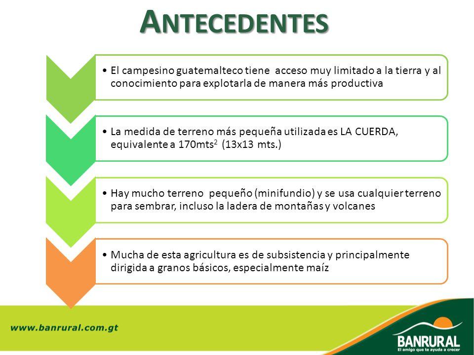 A NTECEDENTES El campesino guatemalteco tiene acceso muy limitado a la tierra y al conocimiento para explotarla de manera más productiva La medida de