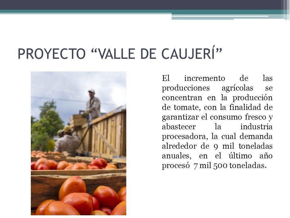 El incremento de las producciones agrícolas se concentran en la producción de tomate, con la finalidad de garantizar el consumo fresco y abastecer la industria procesadora, la cual demanda alrededor de 9 mil toneladas anuales, en el último año procesó 7 mil 500 toneladas.