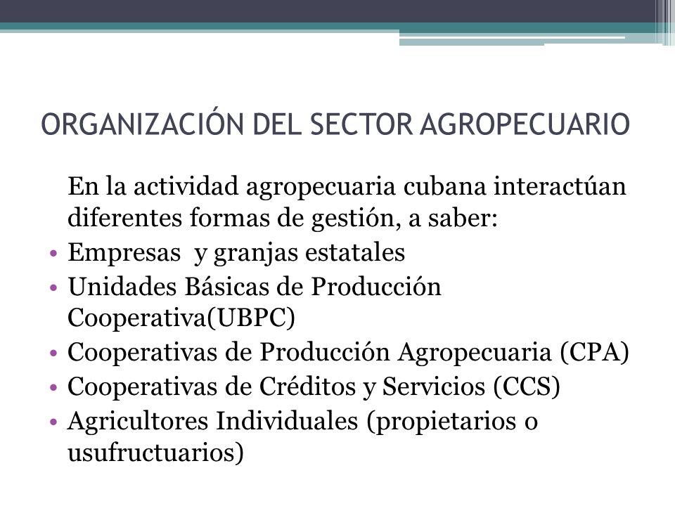 ORGANIZACIÓN DEL SECTOR AGROPECUARIO En la actividad agropecuaria cubana interactúan diferentes formas de gestión, a saber: Empresas y granjas estatales Unidades Básicas de Producción Cooperativa(UBPC) Cooperativas de Producción Agropecuaria (CPA) Cooperativas de Créditos y Servicios (CCS) Agricultores Individuales (propietarios o usufructuarios)