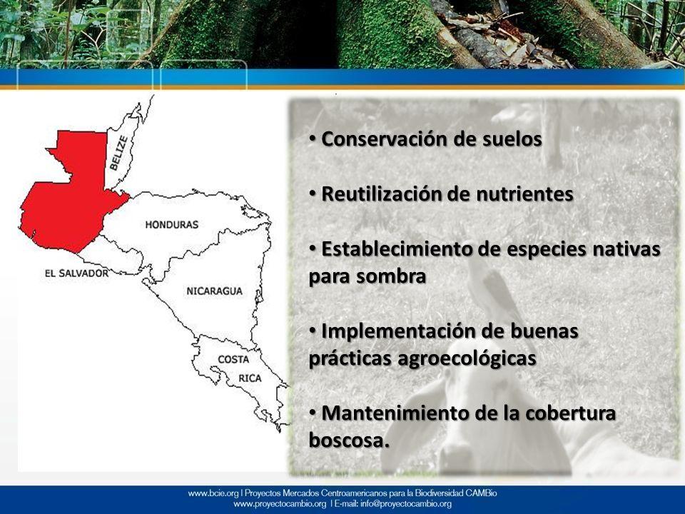 Conservación de suelos Conservación de suelos Reutilización de nutrientes Reutilización de nutrientes Establecimiento de especies nativas para sombra