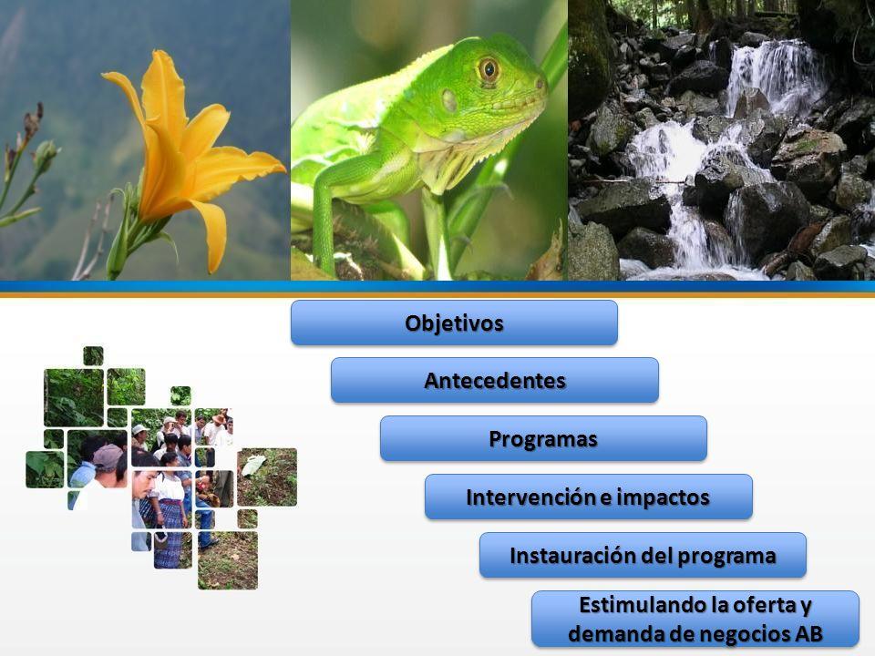 ObjetivosObjetivos Instauración del programa Intervención e impactos AntecedentesAntecedentes ProgramasProgramas Estimulando la oferta y demanda de ne