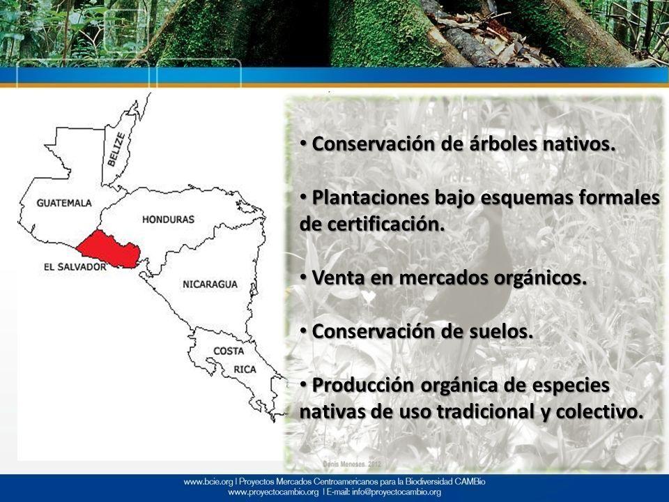 Conservación de árboles nativos. Conservación de árboles nativos. Plantaciones bajo esquemas formales de certificación. Plantaciones bajo esquemas for