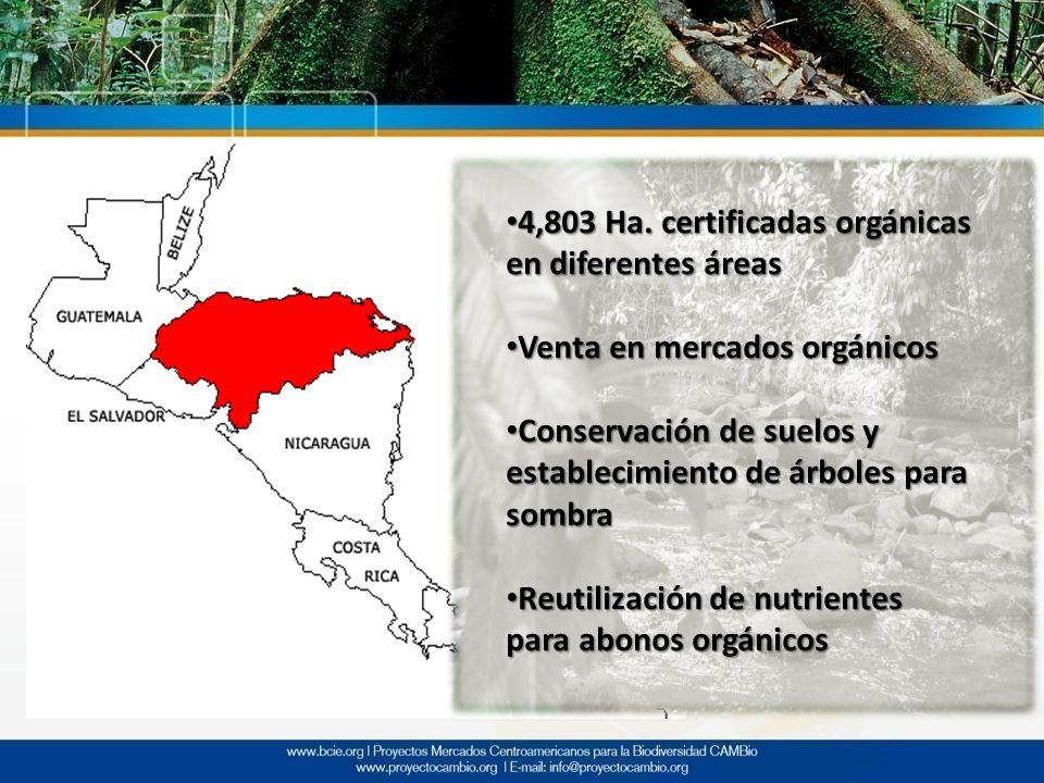 4,803 Ha. certificadas orgánicas en diferentes áreas 4,803 Ha. certificadas orgánicas en diferentes áreas Venta en mercados orgánicos Venta en mercado