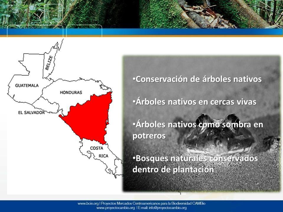 Conservación de árboles nativos Conservación de árboles nativos Árboles nativos en cercas vivas Árboles nativos en cercas vivas Árboles nativos como s