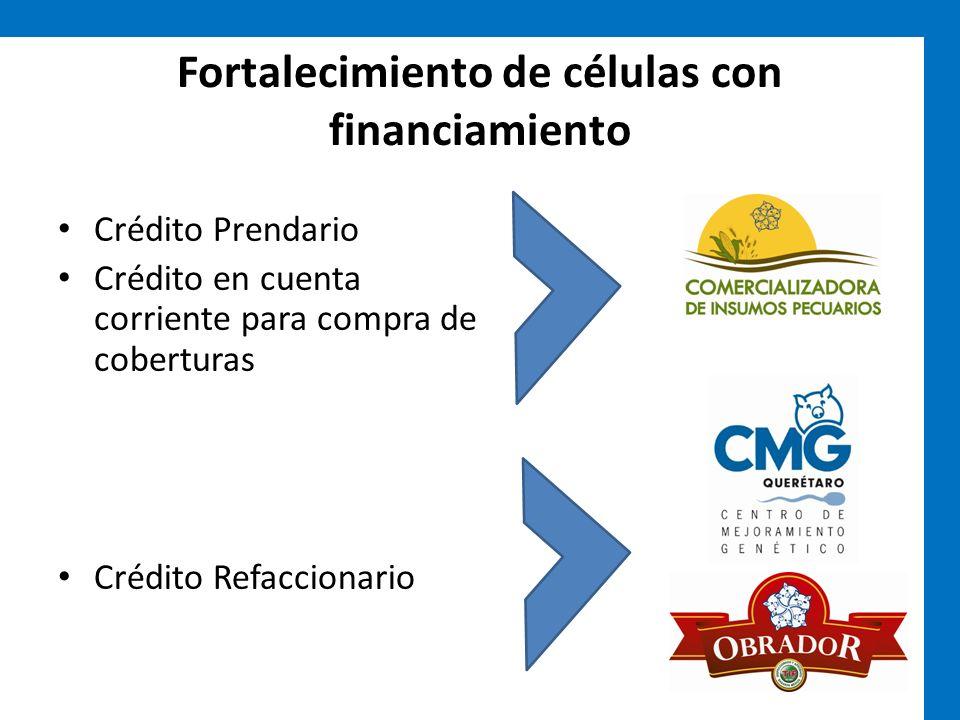 Fortalecimiento de células con financiamiento Crédito Prendario Crédito en cuenta corriente para compra de coberturas Crédito Refaccionario