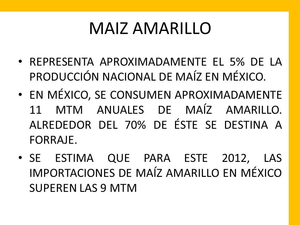 MAIZ AMARILLO REPRESENTA APROXIMADAMENTE EL 5% DE LA PRODUCCIÓN NACIONAL DE MAÍZ EN MÉXICO. EN MÉXICO, SE CONSUMEN APROXIMADAMENTE 11 MTM ANUALES DE M