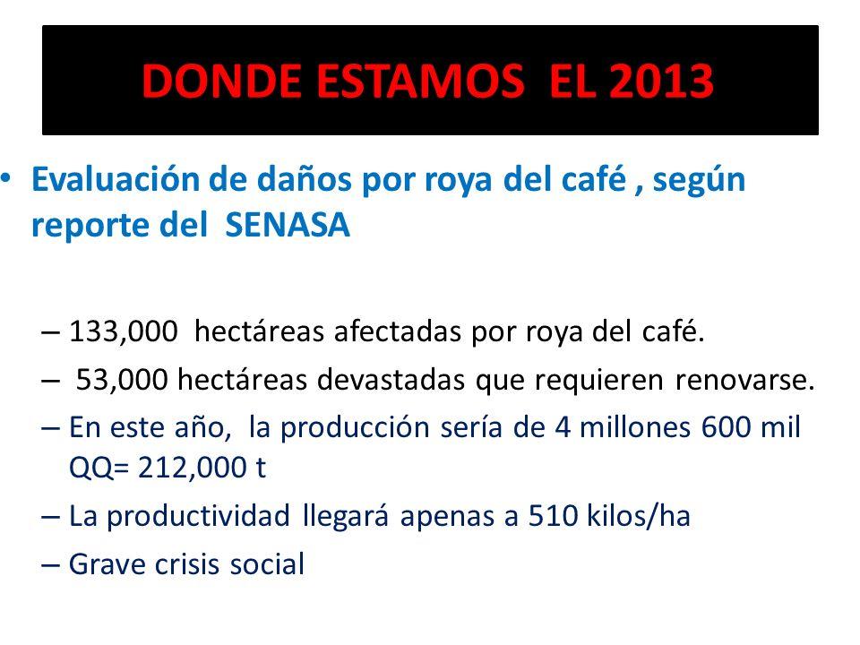 DONDE ESTAMOS EL 2013 Evaluación de daños por roya del café, según reporte del SENASA – 133,000 hectáreas afectadas por roya del café. – 53,000 hectár