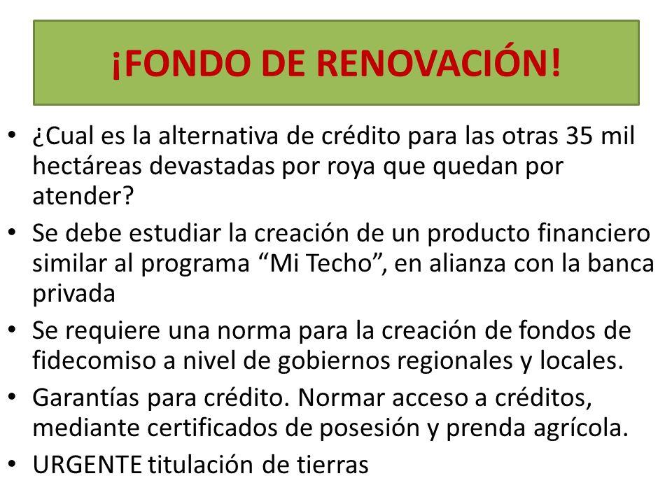 ¡FONDO DE RENOVACIÓN! ¿Cual es la alternativa de crédito para las otras 35 mil hectáreas devastadas por roya que quedan por atender? Se debe estudiar