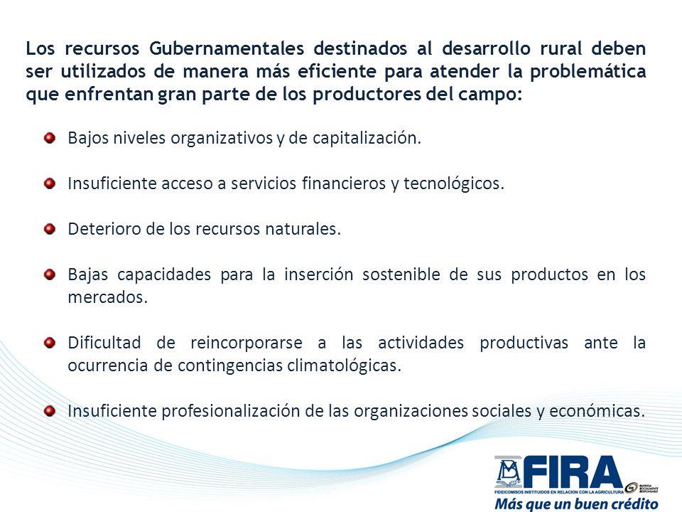 Bajos niveles organizativos y de capitalización. Insuficiente acceso a servicios financieros y tecnológicos. Deterioro de los recursos naturales. Baja