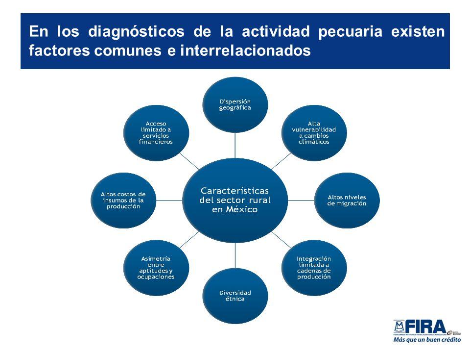 En los diagnósticos de la actividad pecuaria existen factores comunes e interrelacionados
