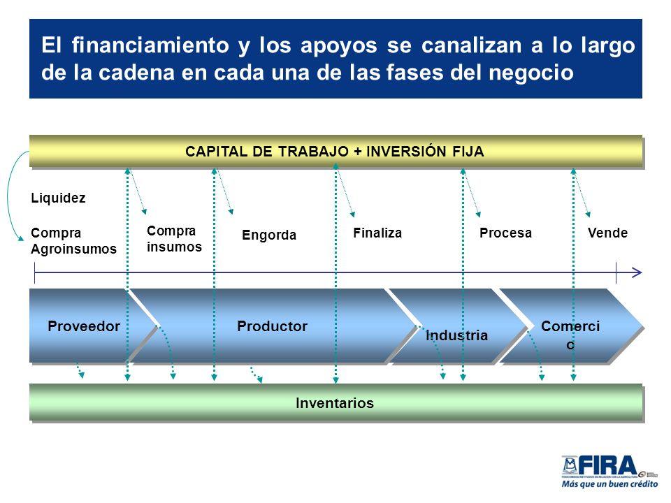 Comerci o Inventarios El financiamiento y los apoyos se canalizan a lo largo de la cadena en cada una de las fases del negocio CAPITAL DE TRABAJO + INVERSIÓN FIJA Compra Agroinsumos Liquidez FinalizaVende Proveedor Procesa Productor Engorda Industria Compra insumos