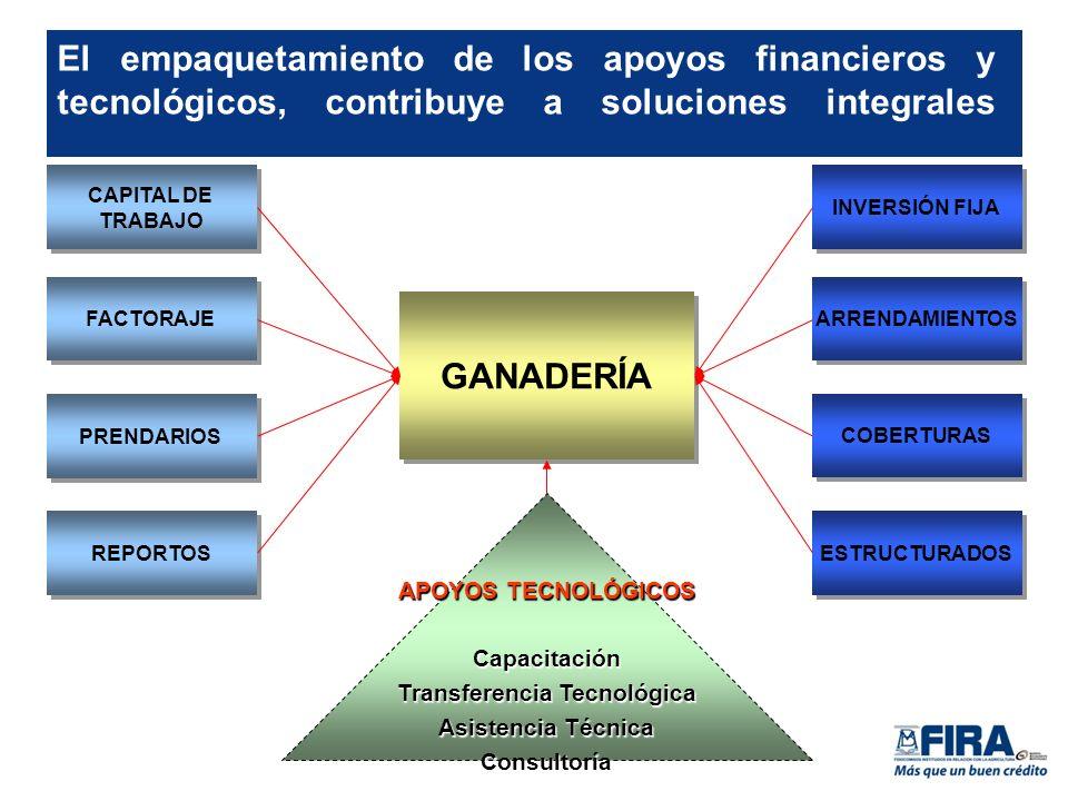 El empaquetamiento de los apoyos financieros y tecnológicos, contribuye a soluciones integrales CAPITAL DE TRABAJO FACTORAJE PRENDARIOS REPORTOS INVERSIÓN FIJA ARRENDAMIENTOS COBERTURAS ESTRUCTURADOS APOYOS TECNOLÓGICOS Capacitación Transferencia Tecnológica Asistencia Técnica Consultoría GANADERÍA
