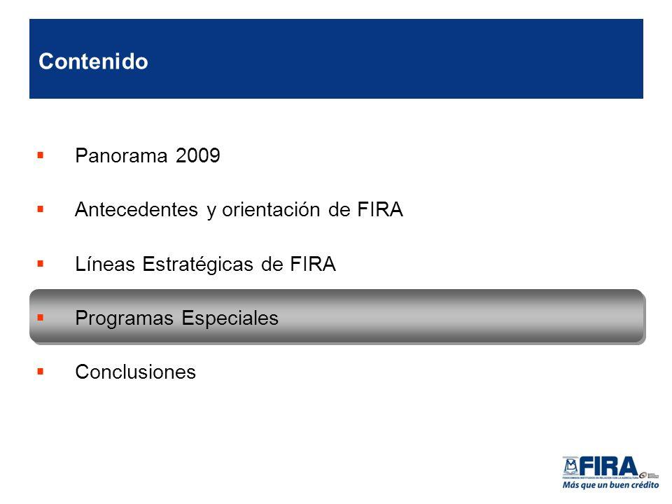 Panorama 2009 Antecedentes y orientación de FIRA Líneas Estratégicas de FIRA Programas Especiales Conclusiones Contenido