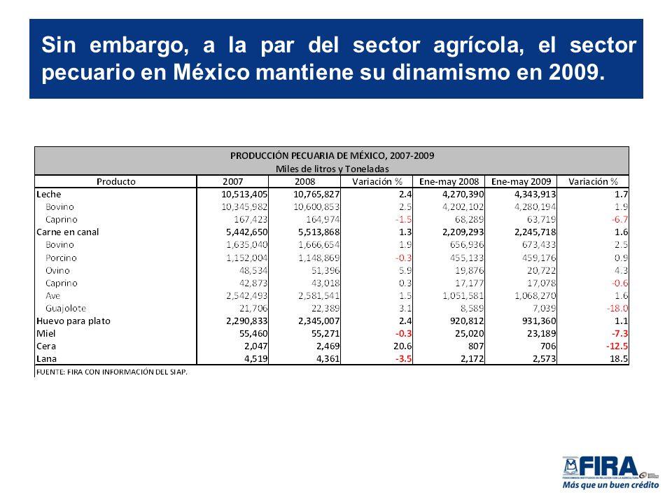 Sin embargo, a la par del sector agrícola, el sector pecuario en México mantiene su dinamismo en 2009.
