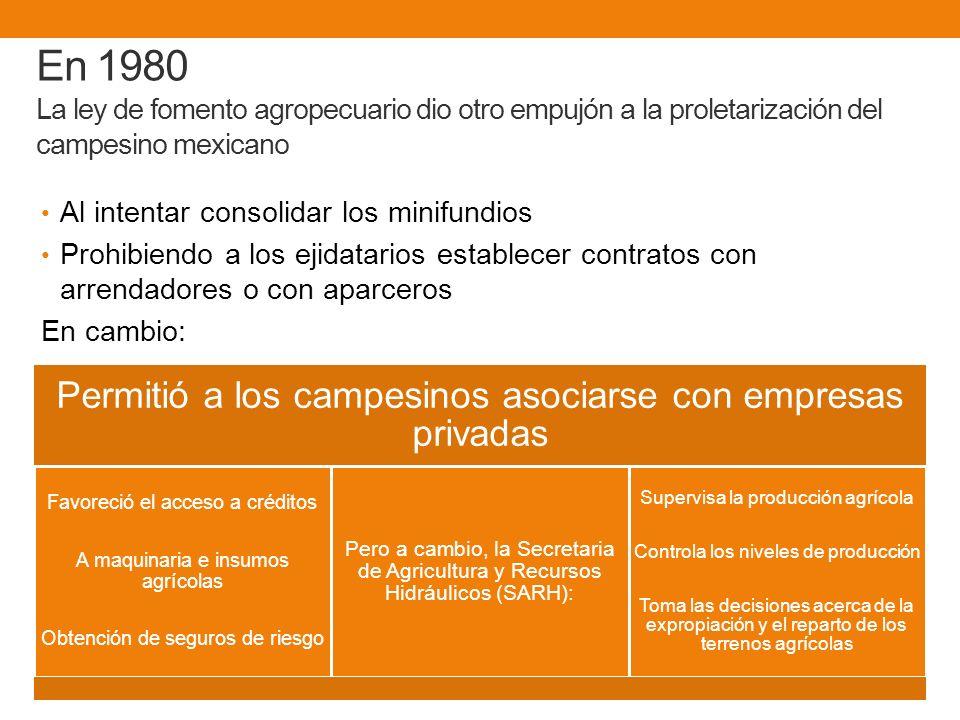 En 1980 La ley de fomento agropecuario dio otro empujón a la proletarización del campesino mexicano Al intentar consolidar los minifundios Prohibiendo a los ejidatarios establecer contratos con arrendadores o con aparceros En cambio: Permitió a los campesinos asociarse con empresas privadas Favoreció el acceso a créditos A maquinaria e insumos agrícolas Obtención de seguros de riesgo Pero a cambio, la Secretaria de Agricultura y Recursos Hidráulicos (SARH): Supervisa la producción agrícola Controla los niveles de producción Toma las decisiones acerca de la expropiación y el reparto de los terrenos agrícolas