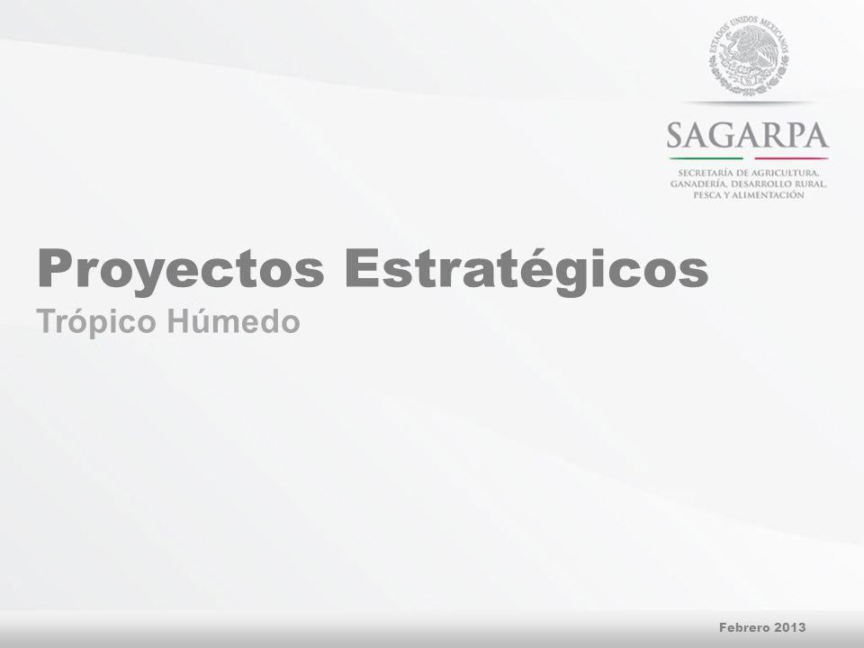 Proyectos Estratégicos Trópico Húmedo Febrero 2013