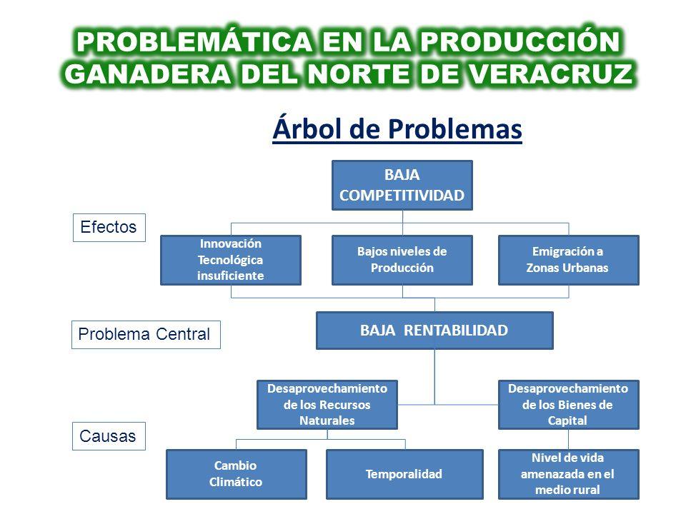 Árbol de Problemas BAJA RENTABILIDAD Problema Central Causas Desaprovechamiento de los Recursos Naturales Innovación Tecnológica insuficiente Bajos ni