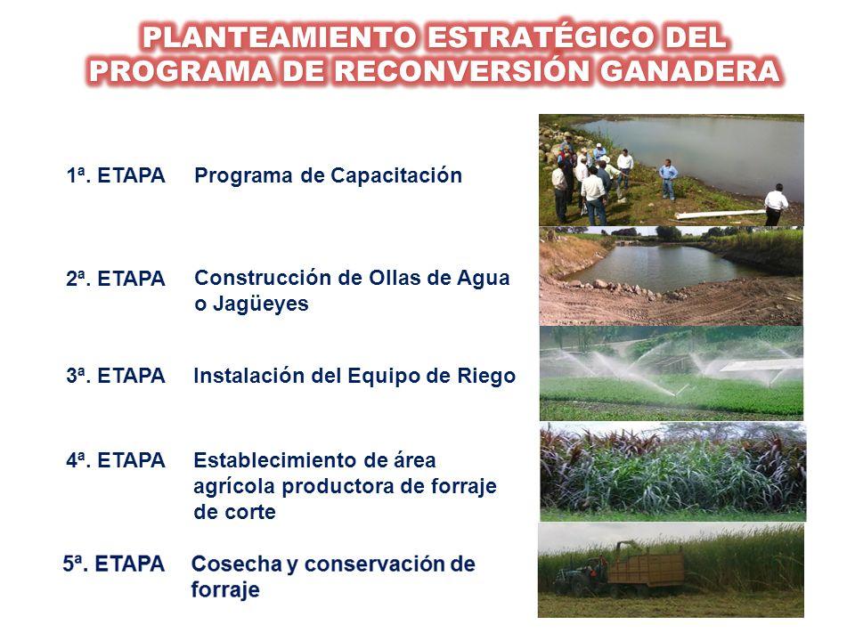 2ª. ETAPA Construcción de Ollas de Agua o Jagüeyes 3ª. ETAPAInstalación del Equipo de Riego 4ª. ETAPAEstablecimiento de área agrícola productora de fo