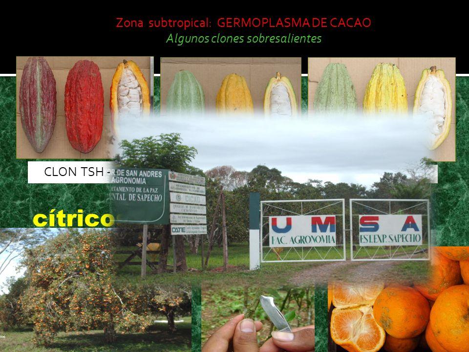 Zona subtropical: GERMOPLASMA DE CACAO Algunos clones sobresalientes CLON TSH - 565CLON POUND - 7 CLON PA - 121 cítricos