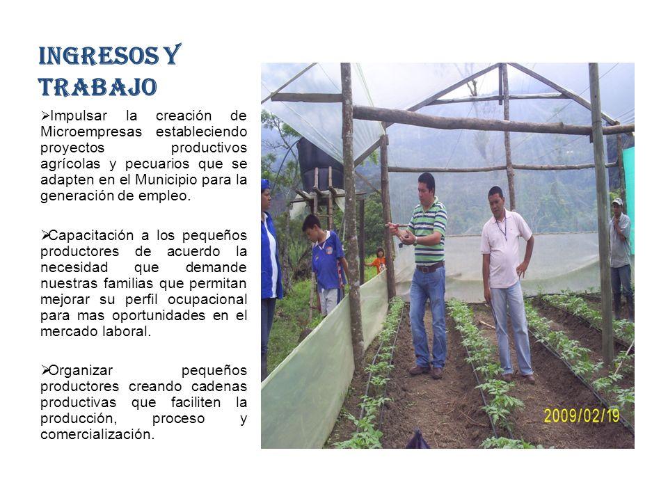 INGRESOS Y TRABAJO Impulsar la creación de Microempresas estableciendo proyectos productivos agrícolas y pecuarios que se adapten en el Municipio para la generación de empleo.