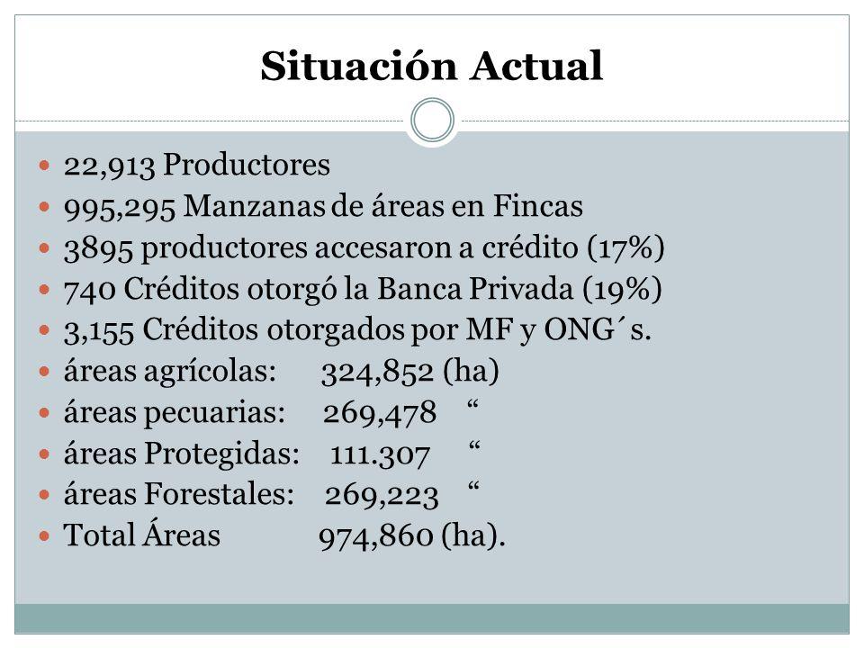 Situación Actual 22,913 Productores 995,295 Manzanas de áreas en Fincas 3895 productores accesaron a crédito (17%) 740 Créditos otorgó la Banca Privad