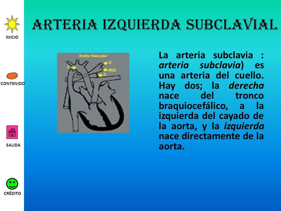 Arteria izquierda subclavial La arteria subclavia : arteria subclavia) es una arteria del cuello. Hay dos; la derecha nace del tronco braquiocefálico,