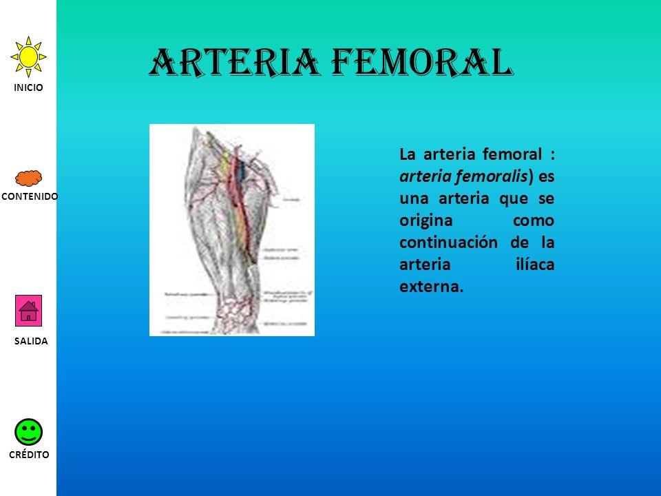 Arteria femoral La arteria femoral : arteria femoralis) es una arteria que se origina como continuación de la arteria ilíaca externa. INICIO SALIDA CR