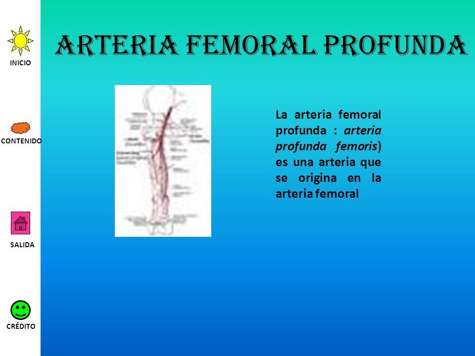 Arteria femoral profunda La arteria femoral profunda : arteria profunda femoris) es una arteria que se origina en la arteria femoral INICIO SALIDA CRÉ