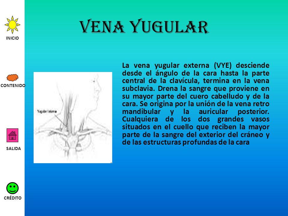 Vena yugular La vena yugular externa (VYE) desciende desde el ángulo de la cara hasta la parte central de la clavícula, termina en la vena subclavia.