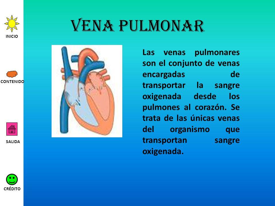 Vena pulmonar Las venas pulmonares son el conjunto de venas encargadas de transportar la sangre oxigenada desde los pulmones al corazón. Se trata de l