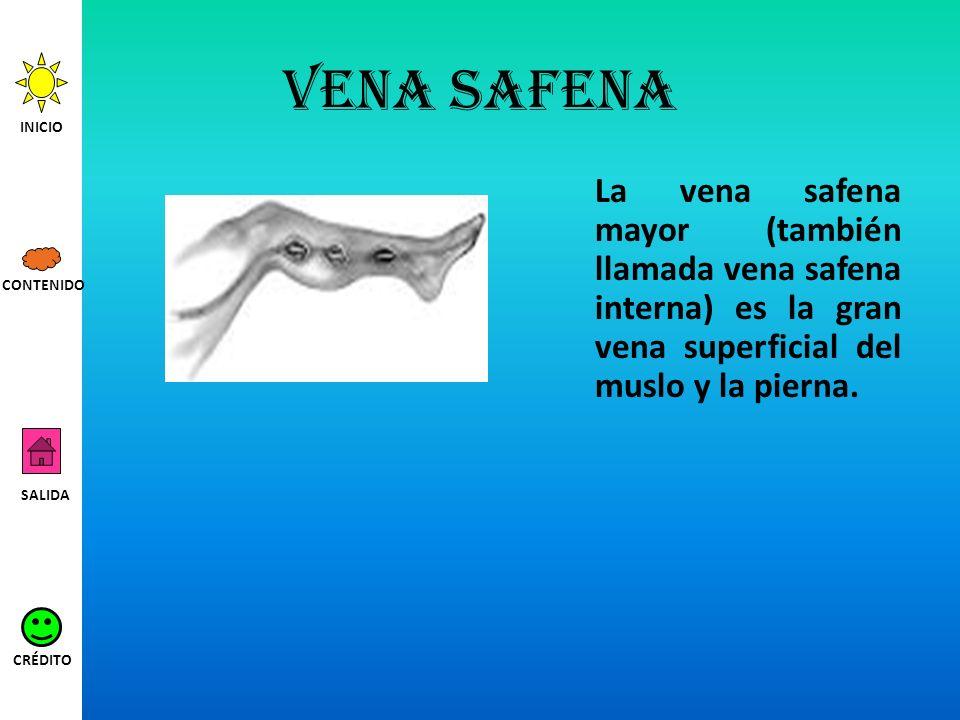 Vena safena La vena safena mayor (también llamada vena safena interna) es la gran vena superficial del muslo y la pierna. INICIO SALIDA CRÉDITO CONTEN